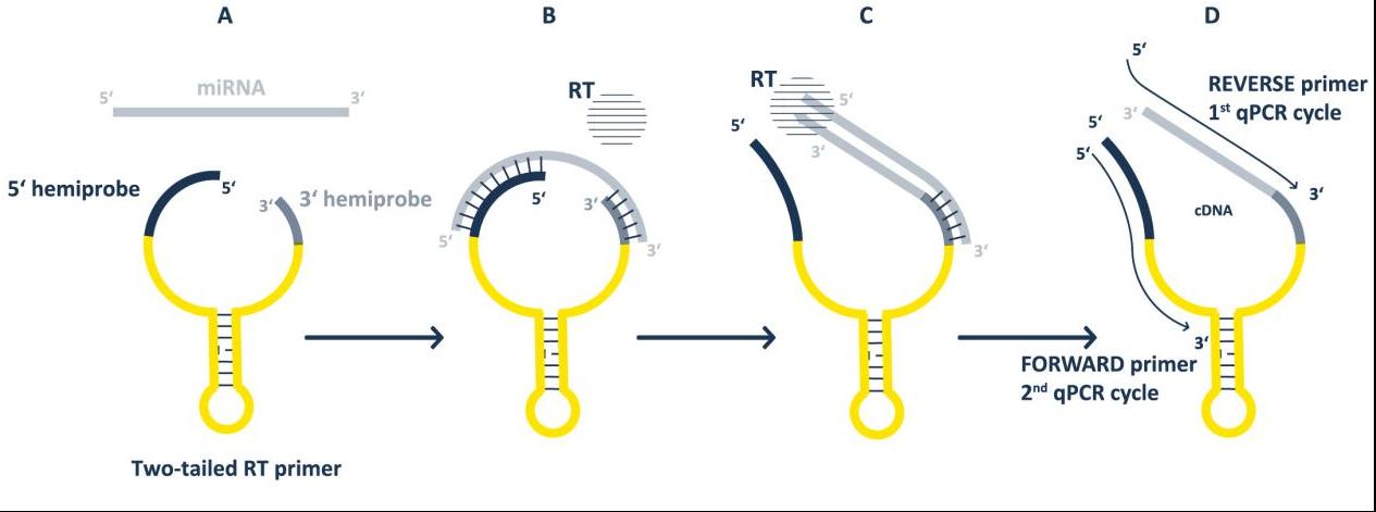TT-PCR.png