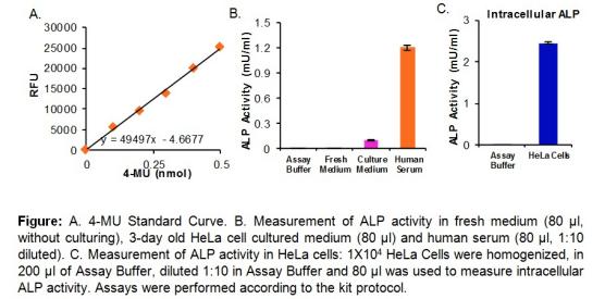 碱性磷酸酶活性荧光检测试剂盒.png