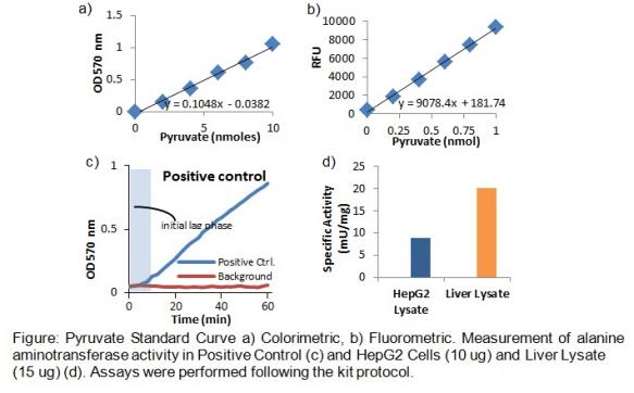丙氨酸转氨酶(ALT或SGPT)活性比色/荧光检测试剂盒.png