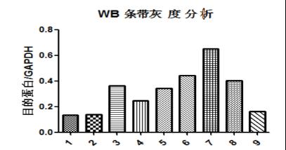 15wb-Gray-analysis.png
