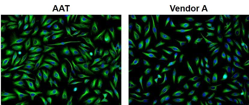 AAT-Biotin4.jpg