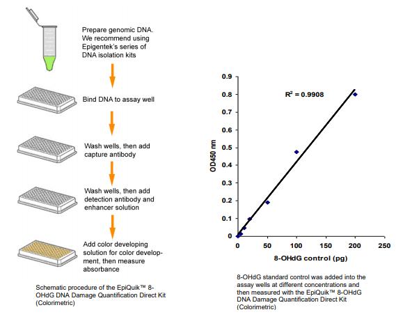 P-6003:8-OHdG DNA 损伤定量直接试剂盒.png