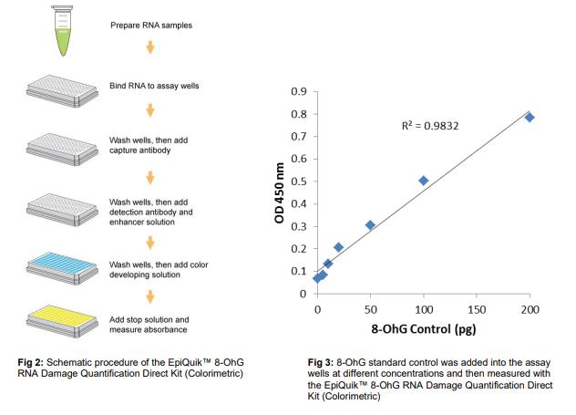 P-6008:8-OhG RNA 损伤定量直接试剂盒(比色法).png