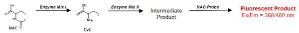 N-乙酰半胱氨酸测定试剂盒检测原理.png