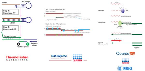 市面上常见的miRNA定量检测试剂盒原理