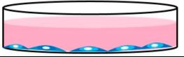 细胞,外泌体